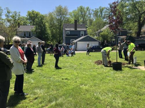 Spectators gather to witness planting of the Tree